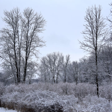 021219_jane-addams-trail-winter-6